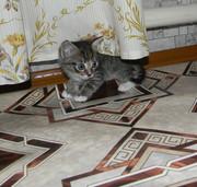 котята ищут своих хозяев