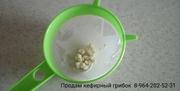 Тибетский кефирный грибок